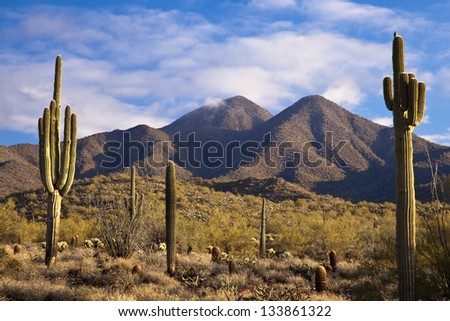 Mountains and Saguaros #133861322