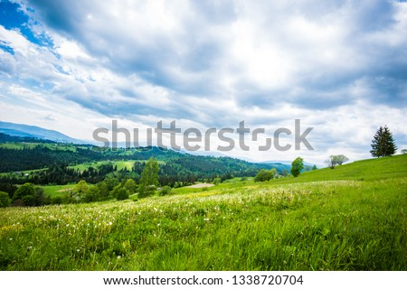 Green hillside in the village #1338720704