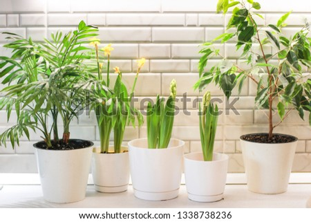 The composition of green domestic plants. Close-up of a plants. Care of home plants. The concept of home interior in the garden. Care of home plants. Gardening.  #1338738236