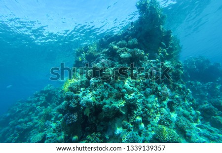Coral reef in red sea Egypt. #1339139357