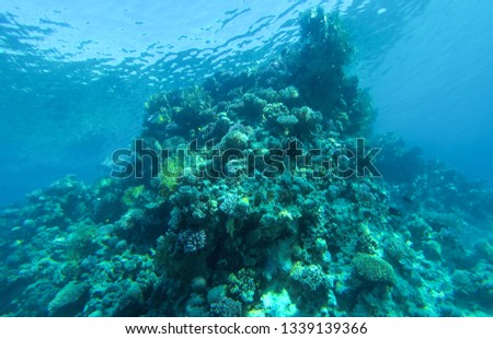 Coral reef in red sea Egypt. #1339139366