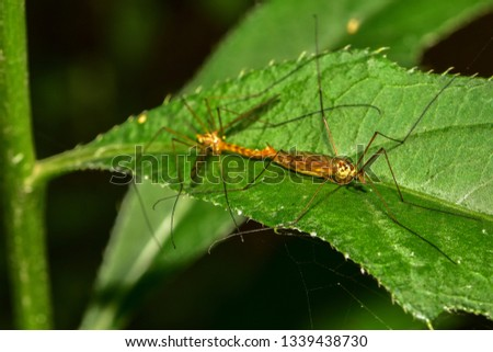 Insects inhabiting wild plants #1339438730