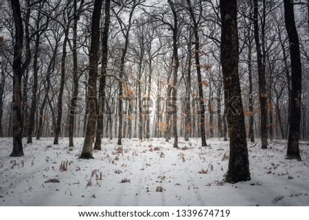 Atmospheric snowy forest with foliage, many trees and shadows of them from the sun light. Forest wallpaper #1339674719