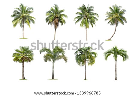 Coconut and palm trees Isolated tree on white background , The collection of trees.Large trees are growing in summer, making the trunk big. #1339968785