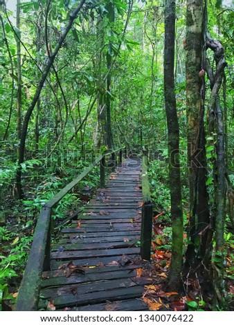 Trail to Kubah Nasional Park waterfall in Kuching Sarawak  #1340076422