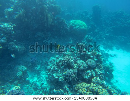 Coral reef in red sea Egypt. #1340088584
