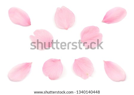 Japanese pink cherry blossom petal isolated on white background #1340140448