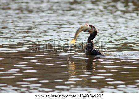 birds care pet #1340349299