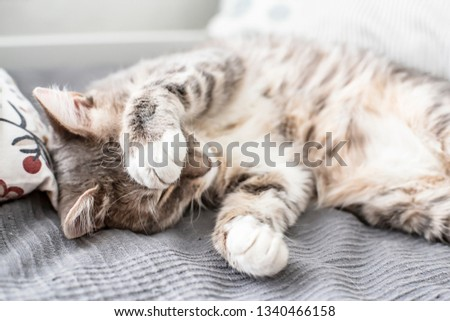 Young, cute cat sleeps on the bed and closes its eyes with its paw from the daylight that comes from the window. Close-up. #1340466158