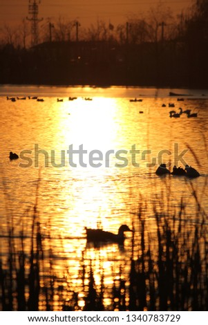 Lake Ducks Swim #1340783729