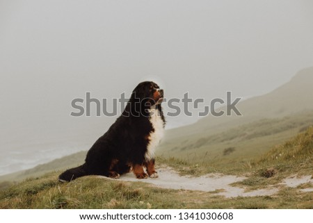 portrait Bernese mountain dog in mountain. cute smile tongue #1341030608