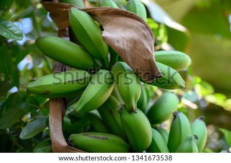 Raw Banana Closeup #1341673538