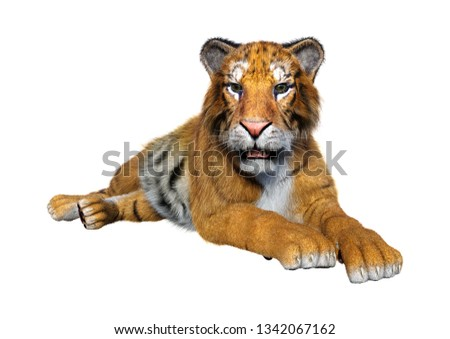 3D rendering of a big cat tiger isolated on white background #1342067162