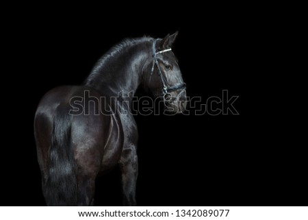 Horse portrait isolated  on black background #1342089077