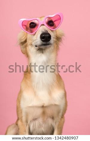 Portrait of a cute silken windsprite wearing pink heart shaped glasses on a pink background