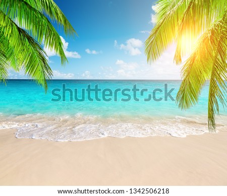 Coconut palm trees against blue sky and beautiful beach in Punta Cana, Dominican Republic. Vacation holidays background wallpaper. View of nice tropical beach. #1342506218
