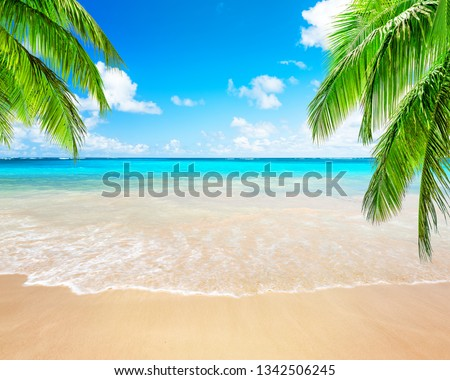Coconut palm trees against blue sky and beautiful beach in Punta Cana, Dominican Republic. Vacation holidays background wallpaper. View of nice tropical beach. #1342506245