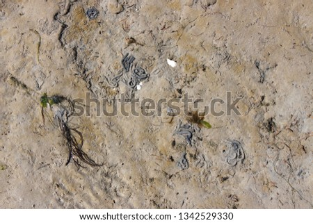 Close up of the wadden sea bed with Lugworm castings in Germany #1342529330