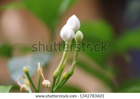 Best Natural Flowers Images, Beauty, Fresh,