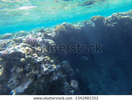 Coral reef in red sea Egypt. #1342885352