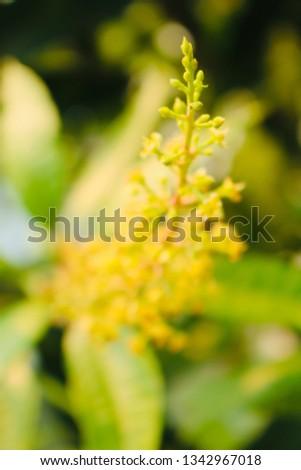 Mango pollen bouquet #1342967018