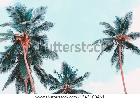Palm trees view from below. Tropical photo background. Jungle summer. Vintage effect with leaves toned in blue color.  Summer concept.