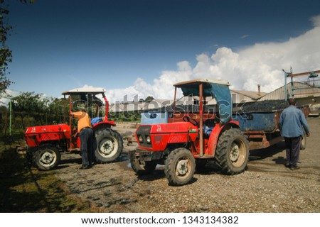 Kakheti Region, Georgia, September 2009: Tractor full of harvested grapes wait their turn outside a wine factory to empty the grapes in the containers where they will be processed.  #1343134382