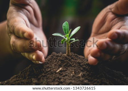 A hands protecting plant growing on soil.protect nature and environment concept #1343726615