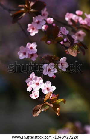 Beautiful nature scene with blooming tree and sun. Easter Sunny day. Spring flowers. Orchard Abstract blurred background in Springtime. #1343927228