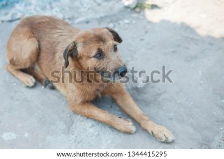Puppy, doggy, doggy, doggy #1344415295