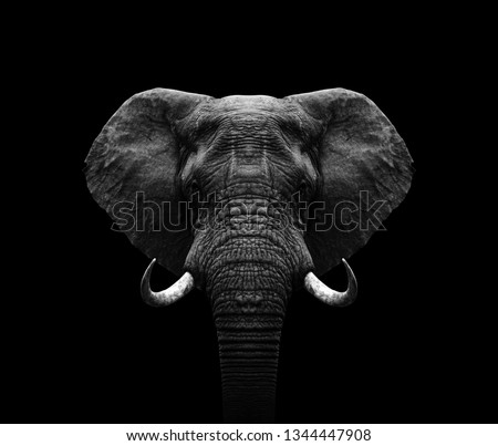Elephant head- black and white Elephant  Royalty-Free Stock Photo #1344447908