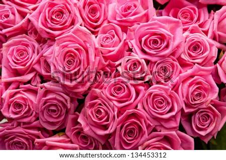 pink natural roses background #134453312