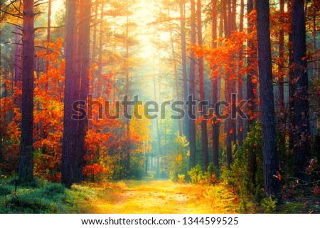 Autumn forest. Fall background. Autumn landscape. Sunny forest with sunlight. Fall trees with colorful leaves. #1344599525