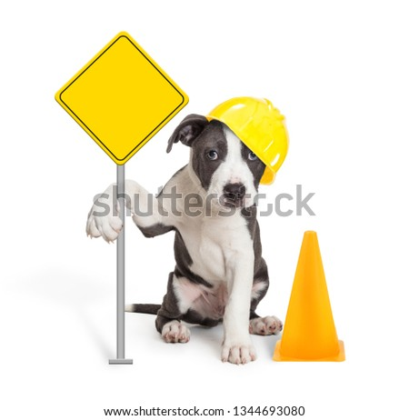 Funny cute puppy dog holding up blank yellow under construction warning sign wearing helmet next to cone