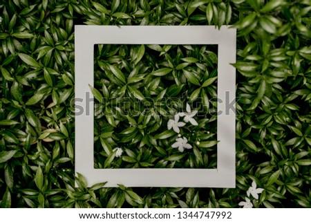 plant pattern tropical leaf background design portrait #1344747992