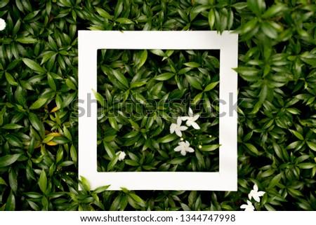 plant pattern tropical leaf background design portrait #1344747998