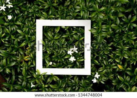tropical leaf texture design, foliage nature dark green background - Image #1344748004