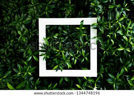 tropical leaf texture design, foliage nature dark green background - Image #1344748196