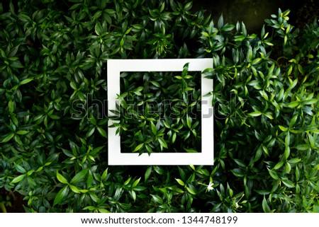 plant pattern tropical leaf background design portrait #1344748199