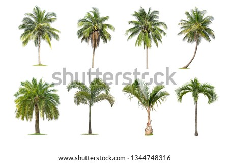 Coconut and palm trees Isolated tree on white background , The collection of trees.Large trees are growing in summer, making the trunk big. #1344748316