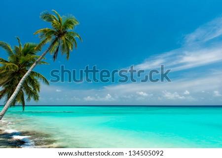 tropical beach on the maldives #134505092