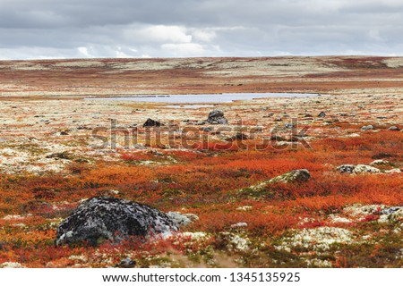 Colorful autumn landscape in tundra with moss, bushes and stones on the ground near the lake on a cloudy day. Kola Peninsula, Murmansk oblast, Russia