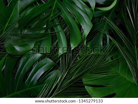Tropical palm, monstera leaves layout texture. Rainforest closeup flat lay texture. #1345279133