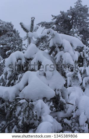 Winter on the mountain. The snow covered the trees. #1345389806