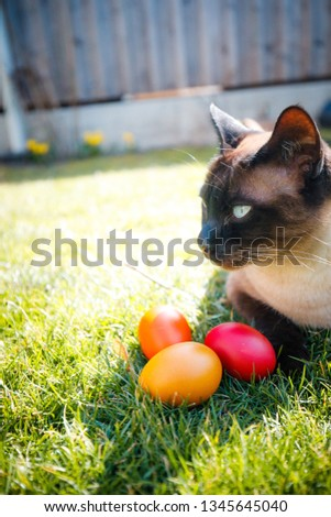 Cute Cat with Easter eggs over bright green grass background. Focus on the kitten #1345645040