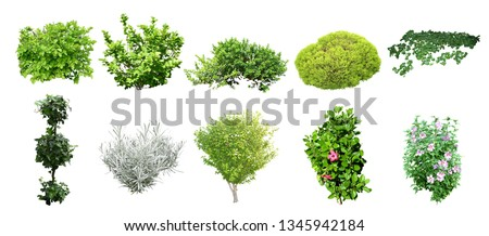 set of isolated shrub on wihite background with clipยing paths Royalty-Free Stock Photo #1345942184