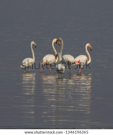 five flamingos standing in a lake #1346196365