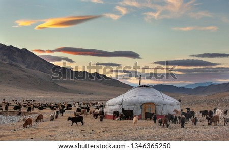 goats around a yurt in Western Mongolia #1346365250