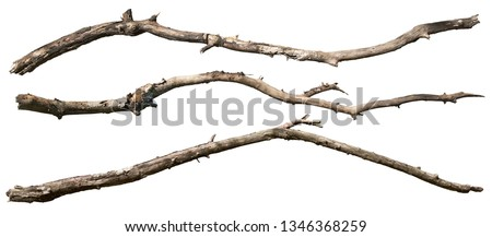 Dry tree branch isolated on white background. Broken branches #1346368259