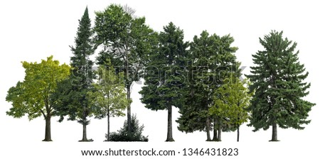 Green trees isolated on white background. Forest and foliage in summer #1346431823